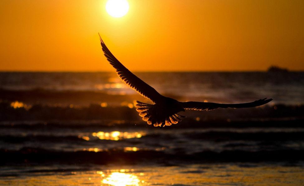 bil-ad-bird