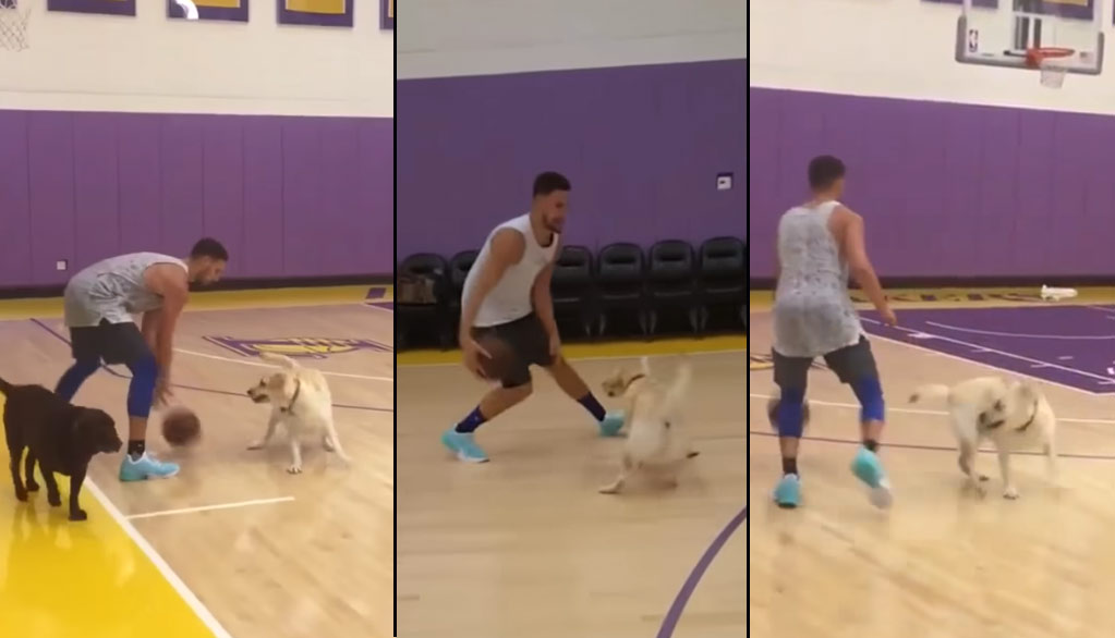 Klay Thompson With The Ankle-Breaking Moves Against A Labrador